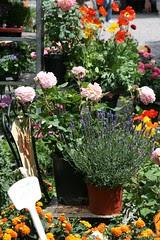 Mercato di fiori