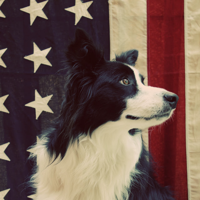 Turbo wishes you a happy 4th!