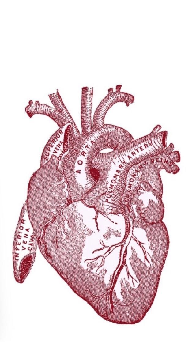 Artistic Anatomy Human Heart Wallpaper