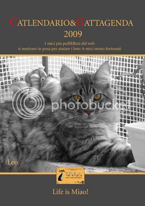 catlendario, calendario, gatti, gatto, 2009