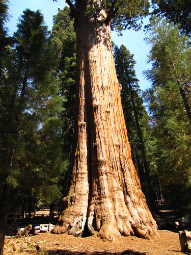 IMG_4038_Sherman_Tree_Trail_Sequoia_NP