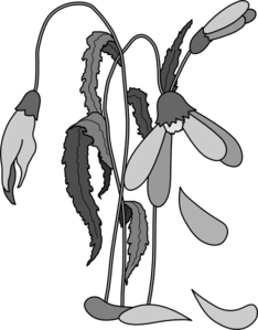 http://sanctuarygardener.files.wordpress.com/2013/02/dying-flower.png%3Fw%3D593