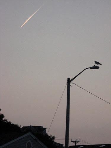 Zen Seagull