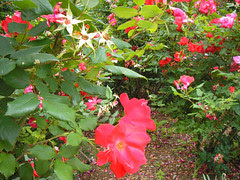 Frelinghuysem Arboretum! 34