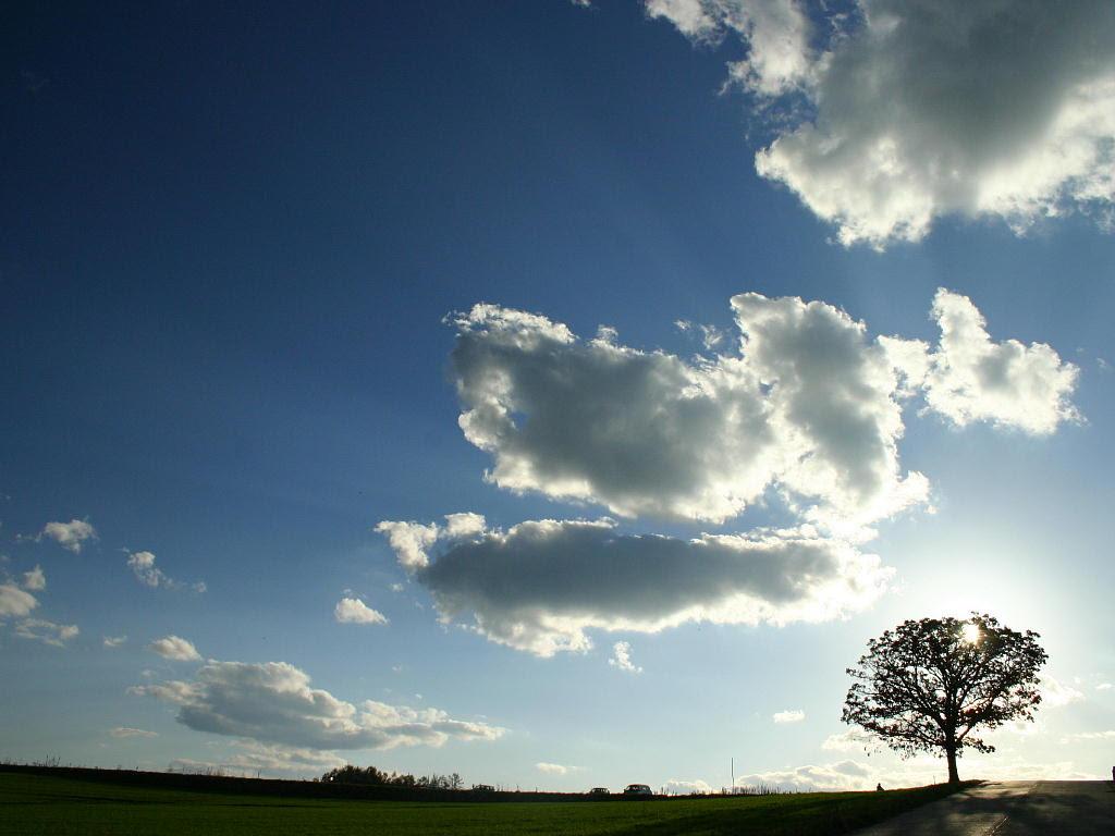 光の樹 美瑛町 セブンスターの木 記憶の中の情景 北海道の壁紙