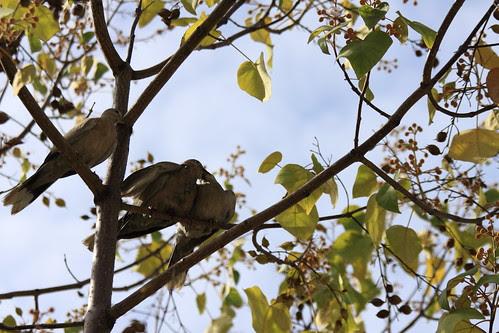 Les amoureux qui se bécottent sur les branches publiques...