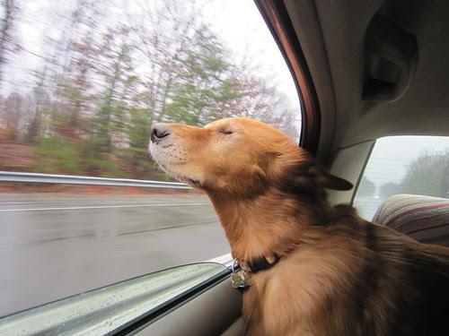 Helen in car