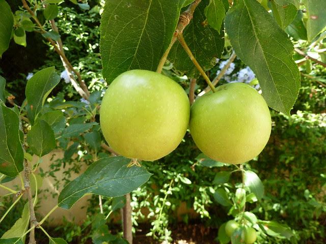 par de manzanas
