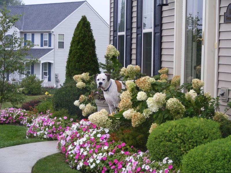 Landscaping Ideas & Garden Ideas > Foundation Fundamentals