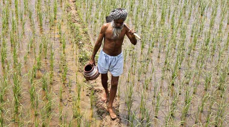 Kisan Credit Card, crop insurance, famers income, farmers subsidy, farmers loan, farmers distress, farmers protest, India farmers, indian express