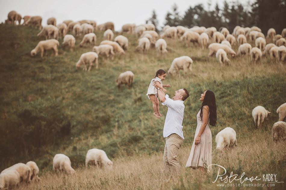 owce na sesji