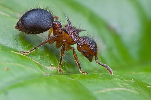 Ant it cute?............IMG_2104 copy