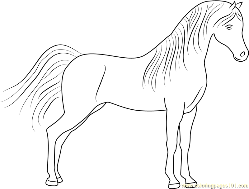 Cute Horse Coloring Page - Free Horse Coloring Pages ...