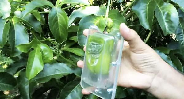 perierga.gr - Ουπς! Κουτιά με χυμό... κρέμονται στα δέντρα!