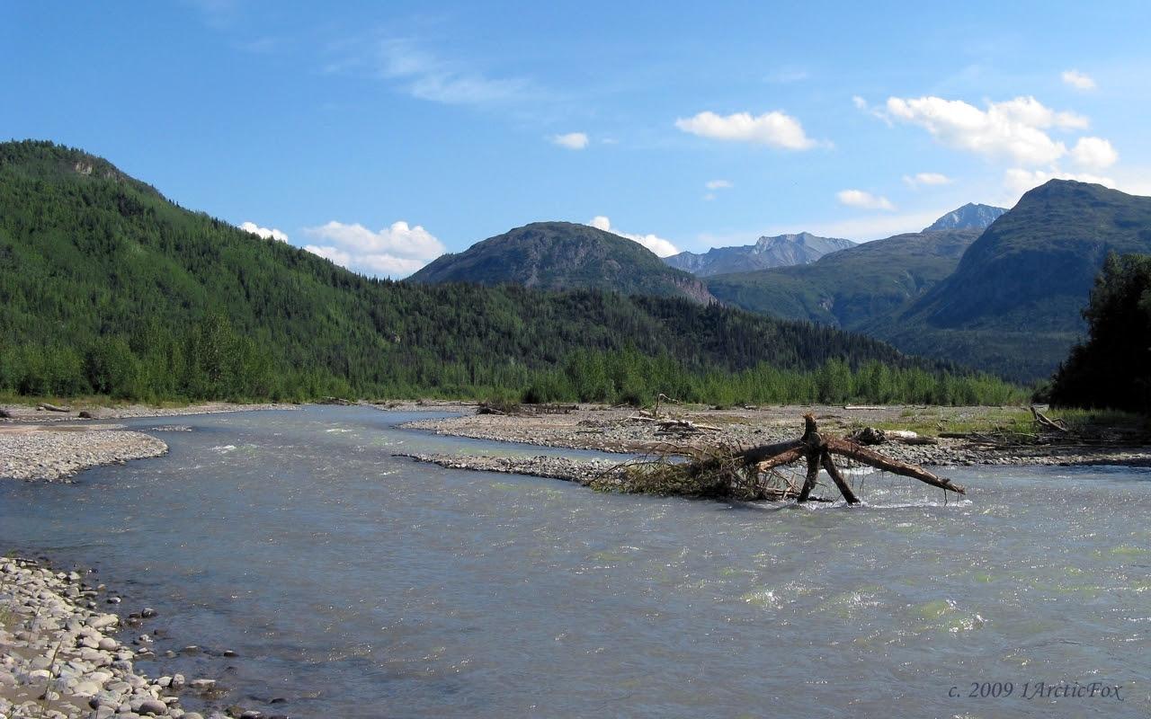 ALASKA RIVER WILDERNESS by 1arcticfox on deviantART