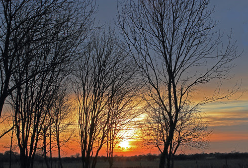 Trees at Sunset by TonyKRO