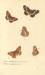 papillons d 7