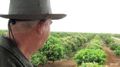 Hombre mirando los sembrados