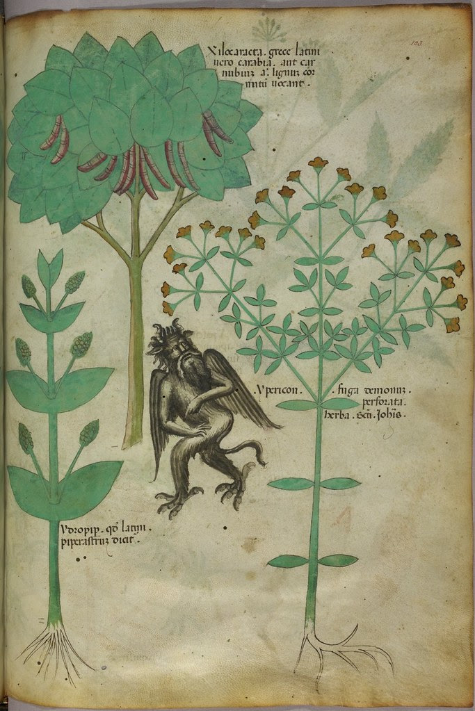 Miniature of plants and a demon - the herb Ypericon, supposed to repell demons - (Tractatus de Herbis - Sloane 4016   f. 103)