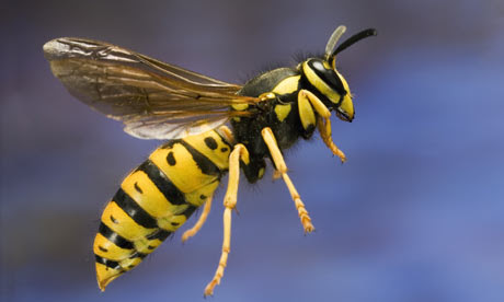 Image result for wasps