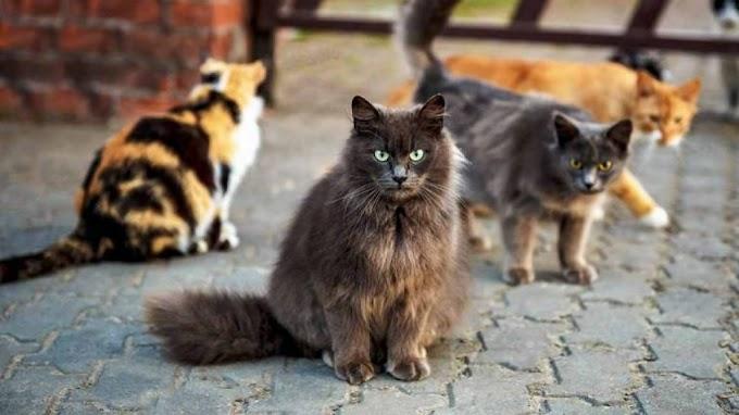 Cómo afecta el nuevo estado de alarma a las mascotas y a los cuidadores de colonias felinas