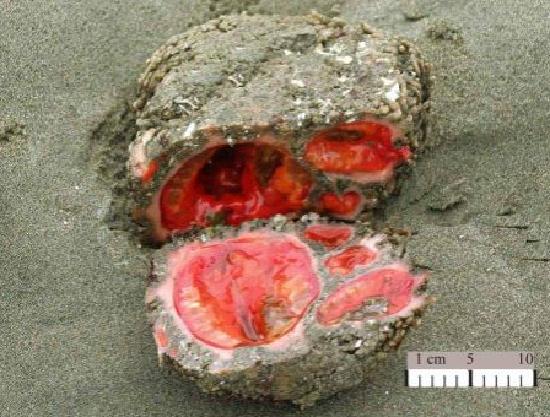 То, что ученые обнаружили внутри камня, найденного на пляже, не поддается объяснениям!