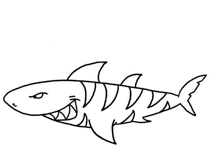 Tiger Shark Drawing at GetDrawings   Free download