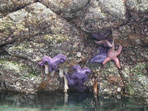 Purple Gooblely Things