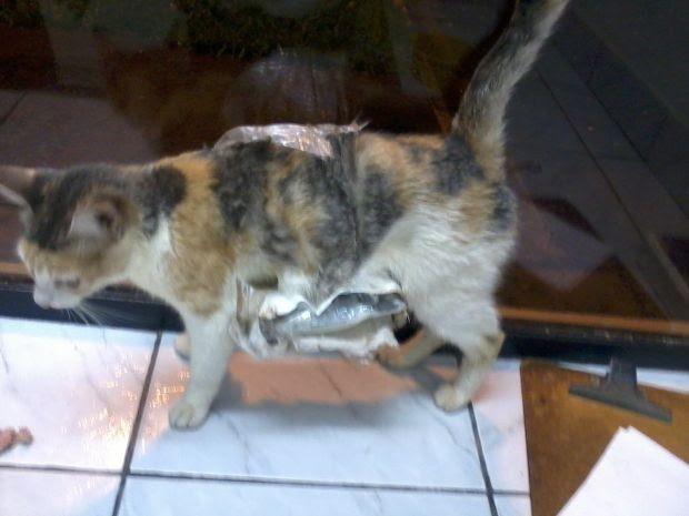 Animal foi encontrado andando com dificuldade por causa do peso dos celulares (Foto: Divulgação/ SAP)