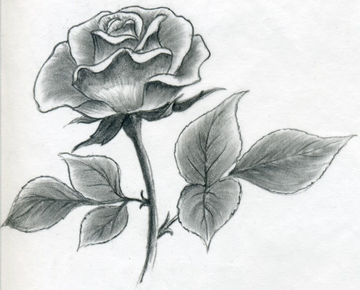 Free Drawing Of A Rose Download Free Clip Art Free Clip Art On Clipart Library