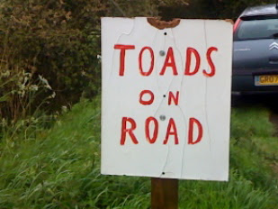 Toads on Road
