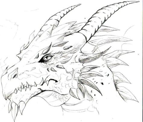 drawings   dragons head sketches  dragons heads