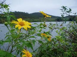 Hồng Thủy Tiên – những câu thơ viết từ nắng gió cao nguyên (2).Viết khi mở e-mail của một người