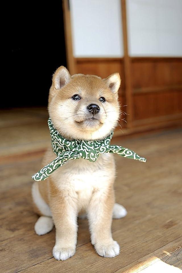 【犬イヌいぬ】愛犬家必見!スマホの壁紙になりそうな画像50枚