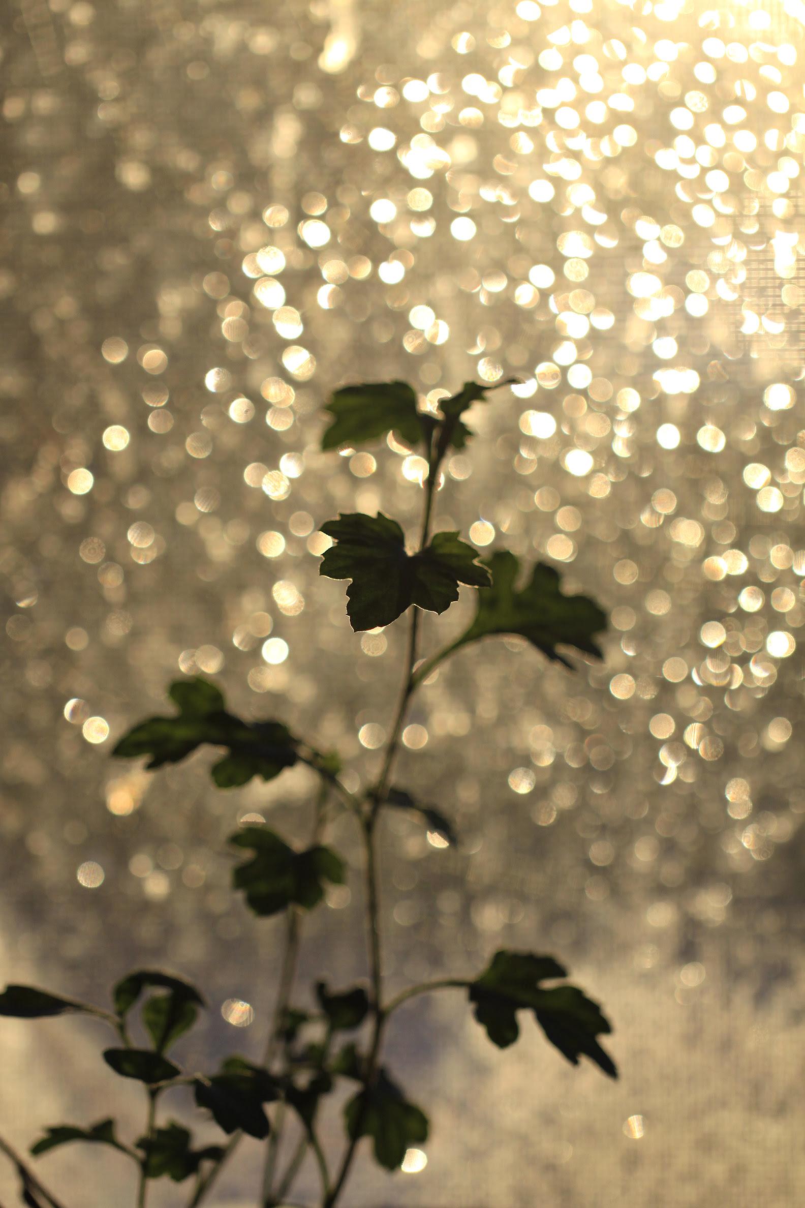 light through screen bokeh