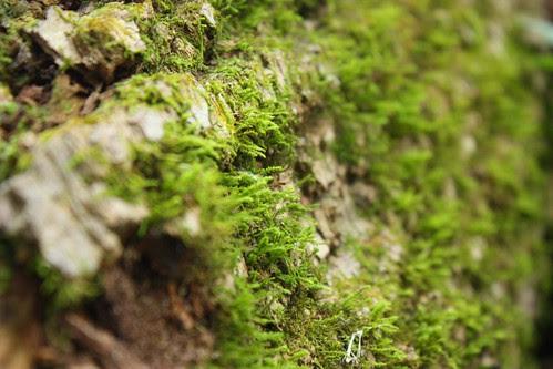 Moss on fallen tree