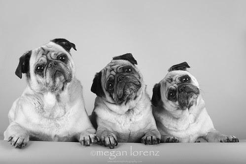 Trouble Trio by Megan Lorenz