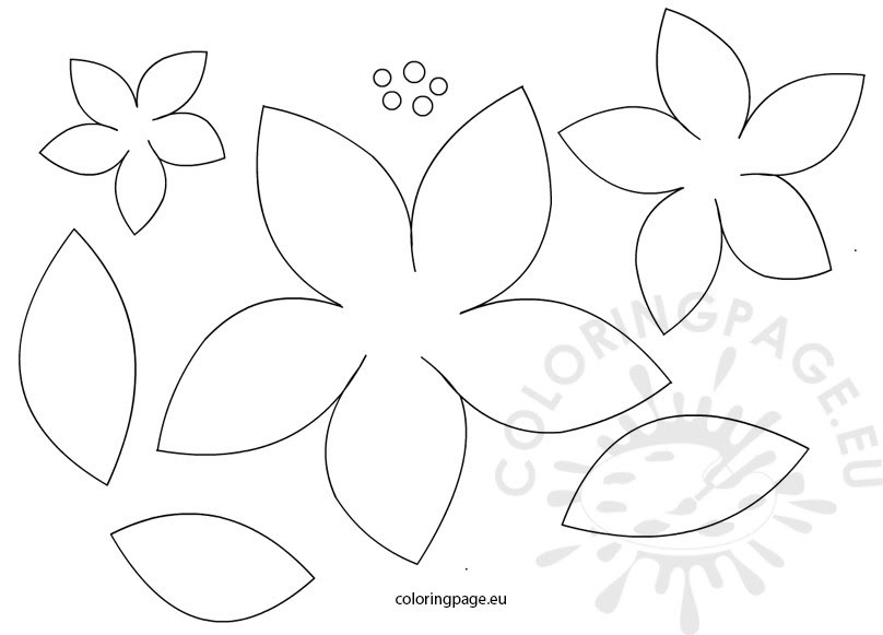 Poinsettia Flowers Patterns Coloring Page