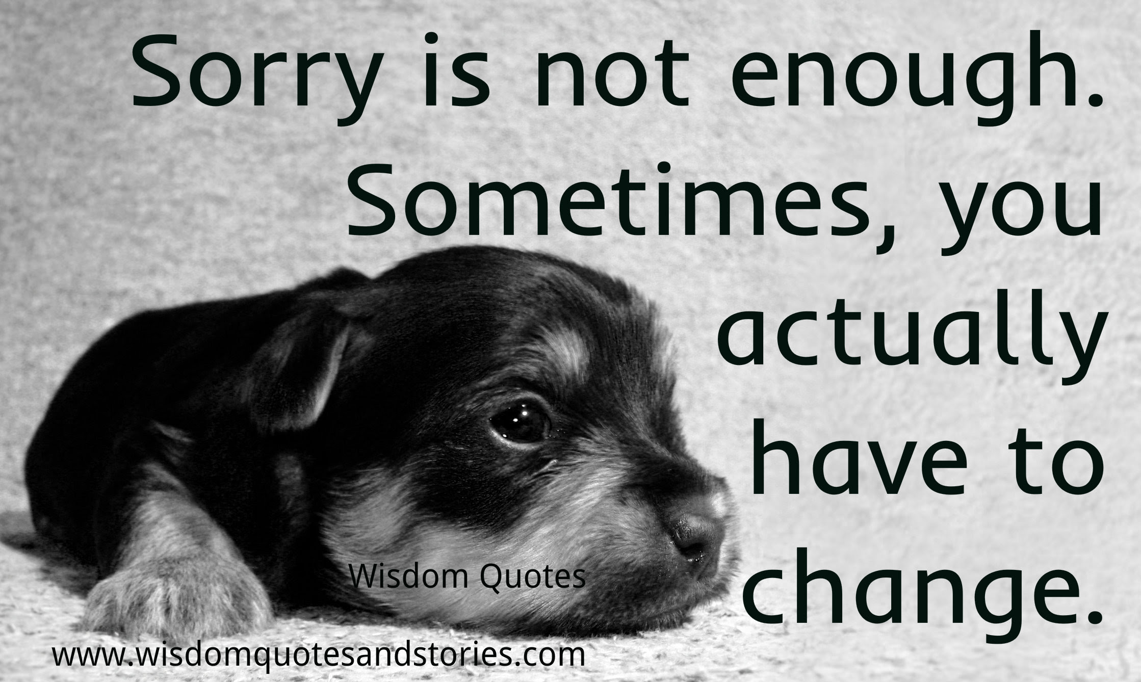 Sometimes Sorry Is Not Enough Wisdom Quotes Stories
