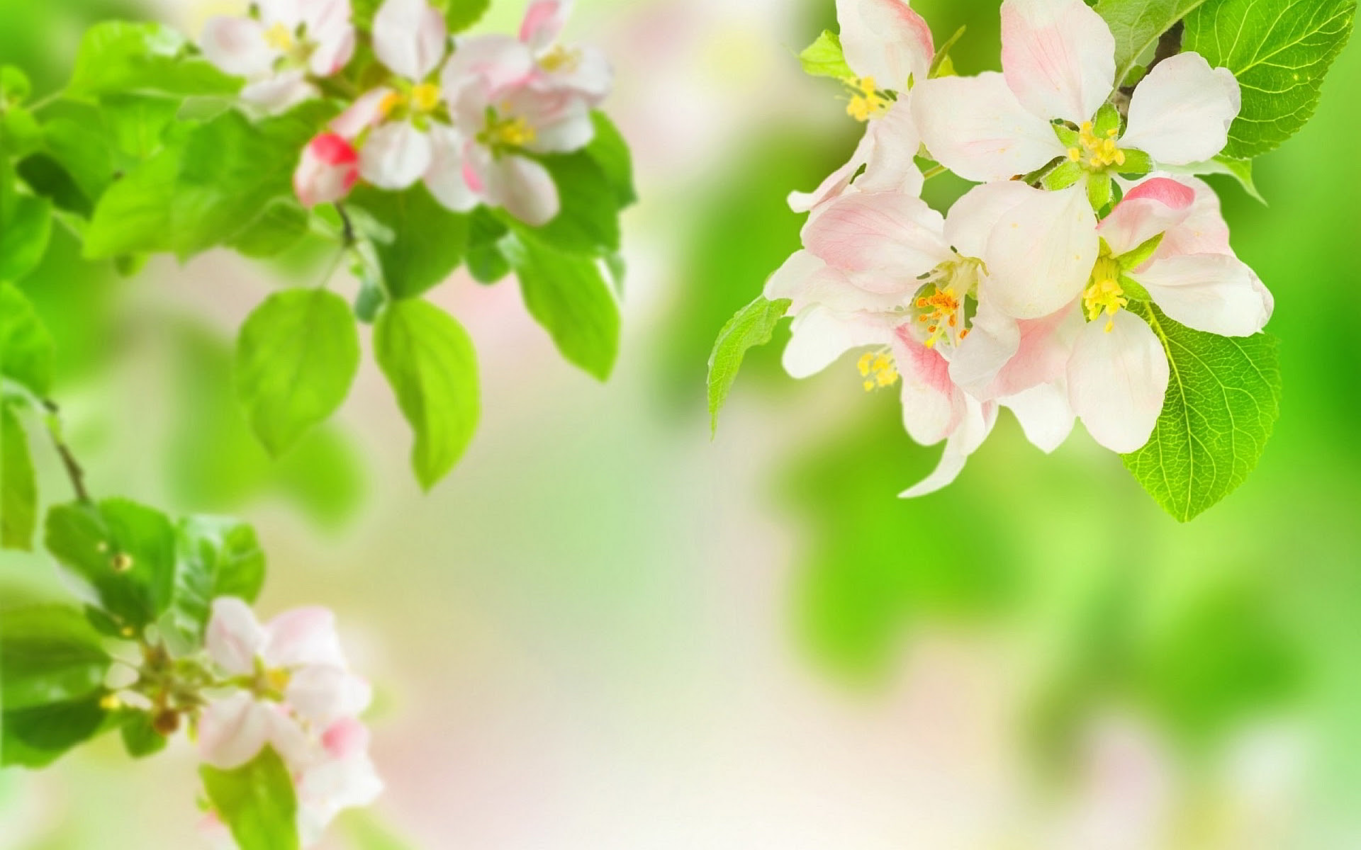 Free Spring Flowers Download Free Clip Art Free Clip Art On