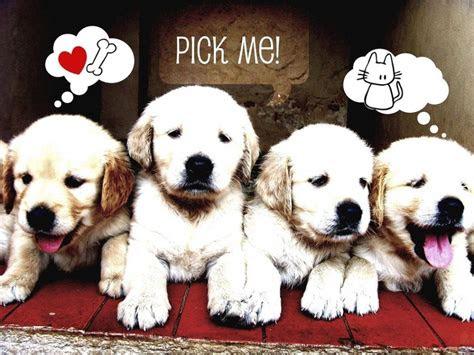 wallpaper lucu anjing  imut berita teknologi