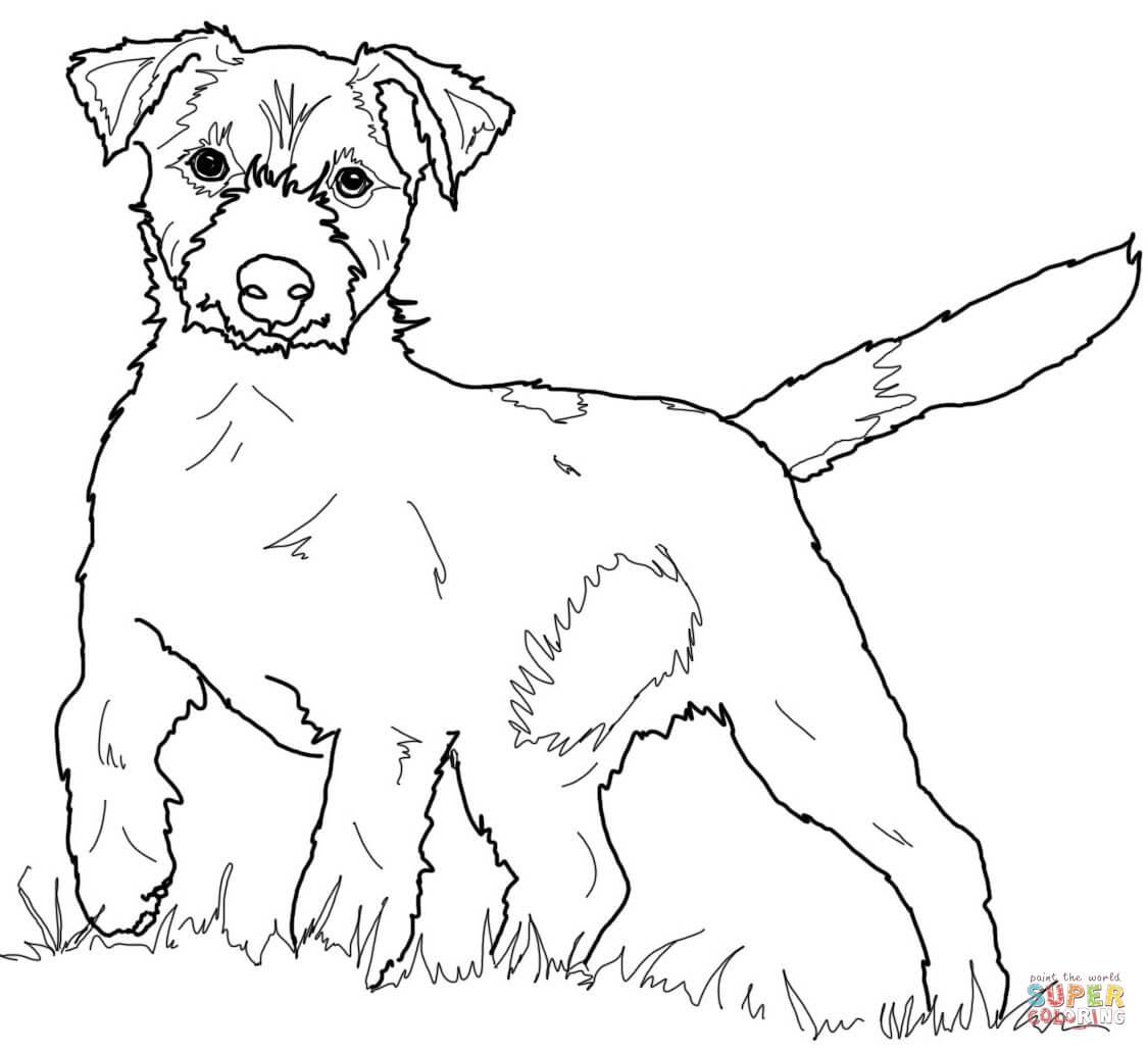 Klick das Bild Jack Russell Terrier