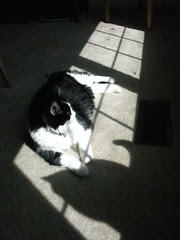 Josie in the sun with Maggie's shadow