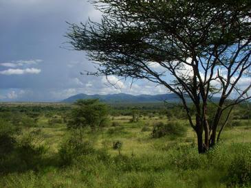 Las sabanas, los paisajes habituales de la evolución humana