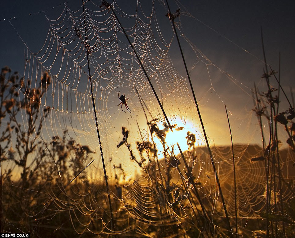 Dewy spiders web at dawn: Photographed by Alex Saberi