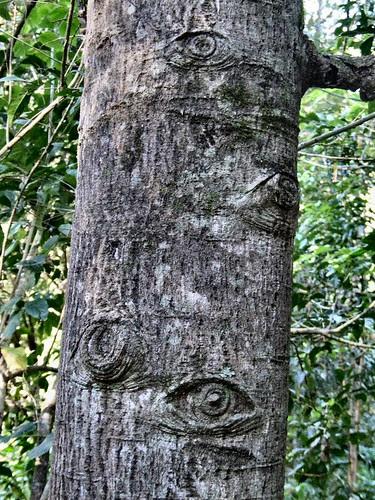 tree eyes by newilluminati.