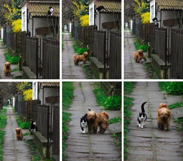 Κάθε μέρα την ίδια ώρα, αυτή τον περιμένει.  Έρχεται και να πάνε για μια βόλτα.