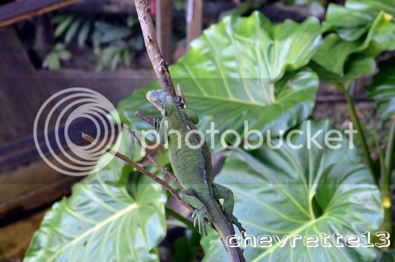 http://i1252.photobucket.com/albums/hh578/chevrette13/Guadeloupe/_DSC1050Copier_zps6f1dbc65.jpg