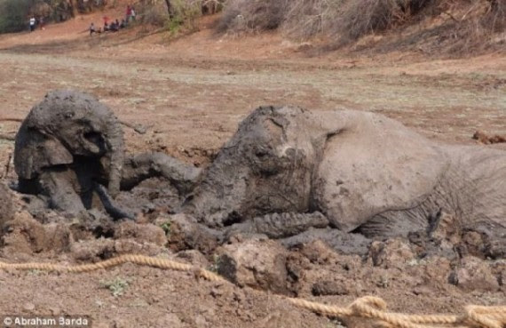 The baby started to cry out again. She wouldn't leave the mud without her mother.