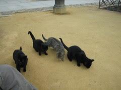Kucing2 Yg Jinak Kat Luar Alcázar, Cordoba, Spain